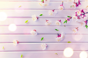 Fotoväggar - Spring blossom on white wooden plank background. Pink blooming apricot flowers
