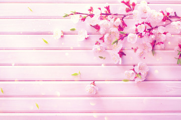 Wall Mural - Spring blossom on white wooden plank background. Pink blooming apricot flowers