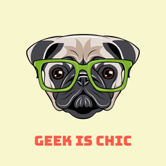 Cute portrait of nerdy Pug dog. Vector illustration isolated on white