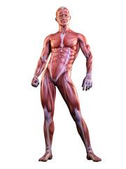 Muscle man anatomy posing 3D Illustration