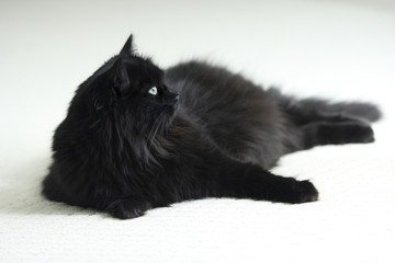 A black cat with green eyes on white carpet.