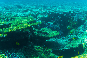 vibrant underwater corall reef