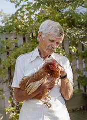 Denmark, Mon, Man holding chicken (Gallus gallus domesticus)