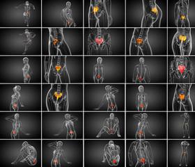 3d rendering medical illustration of the sacrum bone