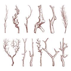 Sketch wood twigs, broken tree branches vector set