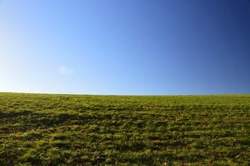 Pole, łąka