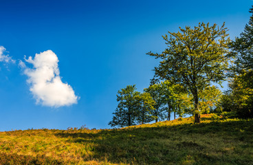 tree on the hillside in beautiful summer day