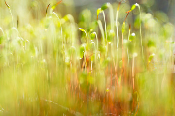 Soft Focus of Fresh green spring plant. Blurry bokeh