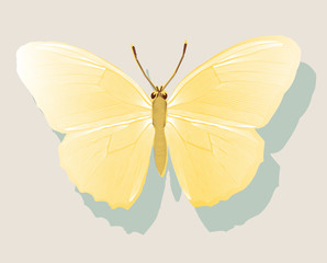 graphic yellow butterfly on a wall