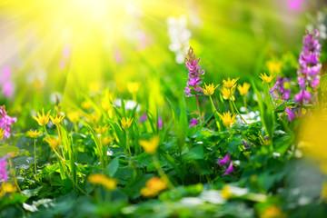 Fotoväggar - Spring wildflowers. Nature meadow field with wild flowers