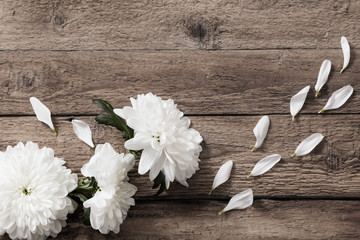 chrysanthemum on old wooden background