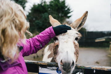 Middle aged woman pets donkey
