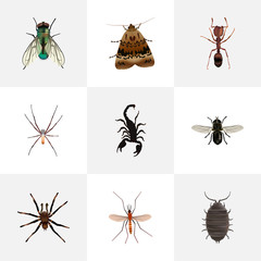 Realistic Arachnid, Housefly, Emmet And Other Vector Elements. Set Of Bug Realistic Symbols Also Includes Moth, Bug, Tarantula Objects.