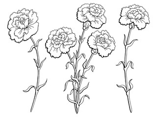 Carnation flower graphic black white isolated sketch illustration vector