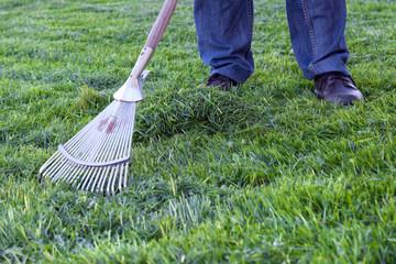 Mann harkt frisch gemähtes Gras zusammen, Gartenarbeit