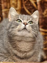 Cute gray striped cat