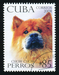 CUBA - CIRCA 2008: A post stamp printed in Cuba shows image of a Chow Chow, circa 2008