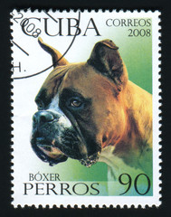 CUBA - CIRCA 2008: A post stamp printed in Cuba shows image of a Boxer, circa 2008