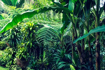 Lush Tropical Jungle Background