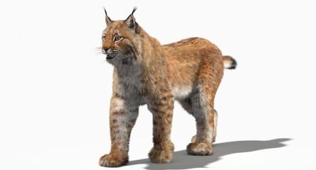 Eurasian Lynx (3d)