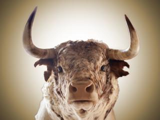 Wall Murals Bullfighting Primer plano de toro bravo