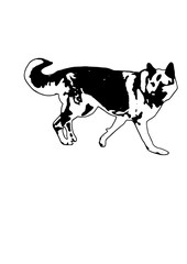 Silhouette dog sheep dog vector