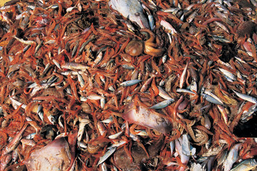 Trawling is the most wasteful fishing method in the world. By catch ratio goes up to 1:9 ratio.