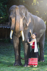 Pretty asian girl in traditional thai dress touching elephant