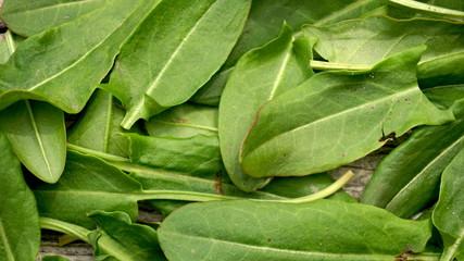 Fresh organic sorrel closeup background