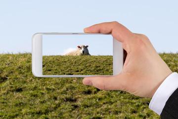 Schaf fotografieren mit smartphone