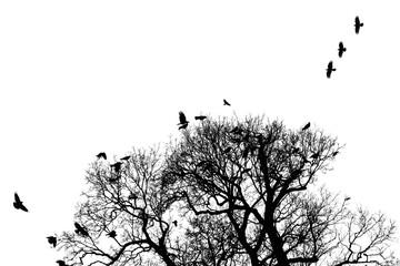 Krähen schwirren um Baum