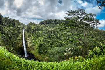 Waterfall in the tropical Hawaiian rainforest