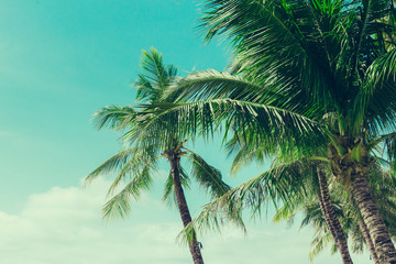 Coconut palm trees tropical background, vintage
