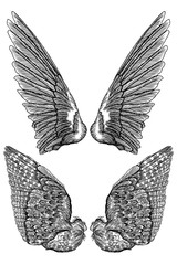 Pair of spread out eagle, falcon, hawk bird wings of different shape. Set of angel wings. Vector.