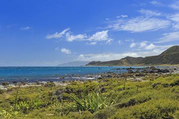 Wainuiomata coast
