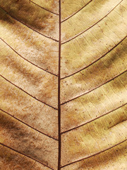 dry brown autumn leaf texture