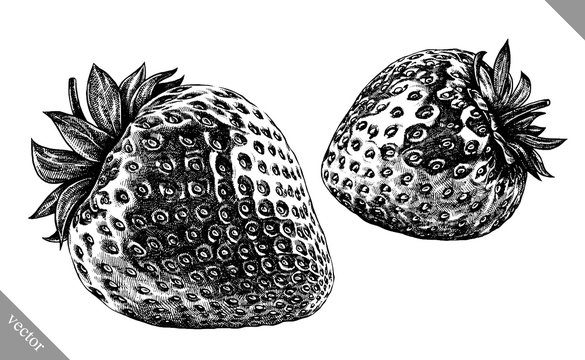 Engrave isolated strawberry hand drawn graphic vector illustration