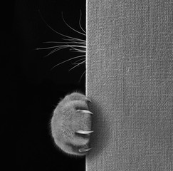The cat hid behind a big book. We can see only cat's paw with long and sharp claws and whiskers. Black and white photo.