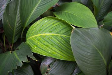 water drop on green leaf in garden.