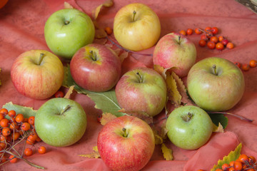 Apples and berries of mountain ash