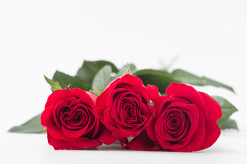 Red roses on a white background. Isolate