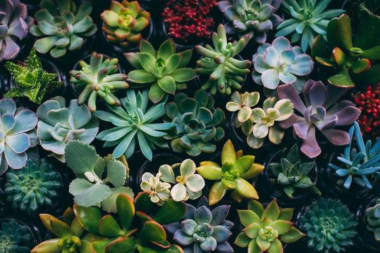 Garden flowers. Small garden flowers close-up.