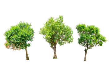Isolated Trees on white background , The collection of trees.