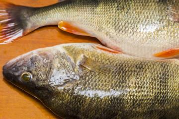 Fresh  perch fish on wooden cutting Board.Fine cuisine