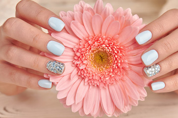 Fototapete - Cose-up of a delicate pink gerbera and blue manicure.