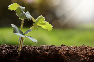 Printed kitchen splashbacks Bonsai Young Plant Growing In Sunlight