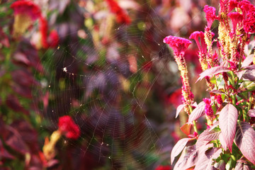 spider web and flowers- macro photography