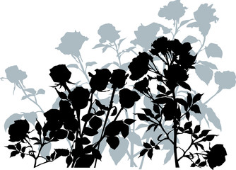 grey and black roses bunch silhouette isolated on white
