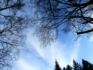 Blue sky with clouds and branches