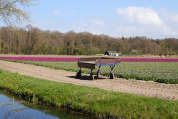 Tulpenfeld, Blumenwagen, Amsterdam